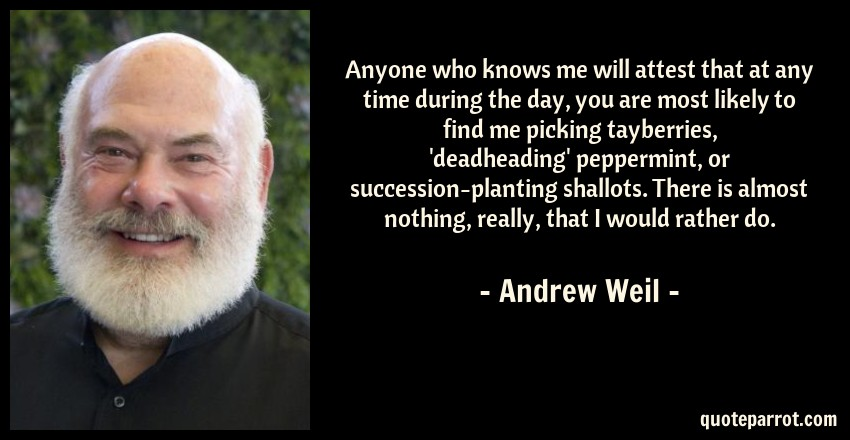 Andrew Weil Quote: Anyone who knows me will attest that at any time during the day, you are most likely to find me picking tayberries, 'deadheading' peppermint, or succession-planting shallots. There is almost nothing, really, that I would rather do.