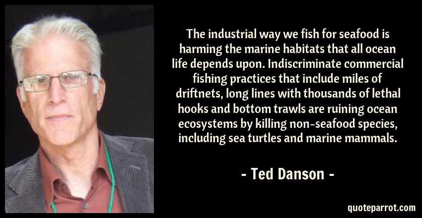 Ted Danson Quote: The industrial way we fish for seafood is harming the marine habitats that all ocean life depends upon. Indiscriminate commercial fishing practices that include miles of driftnets, long lines with thousands of lethal hooks and bottom trawls are ruining ocean ecosystems by killing non-seafood species, including sea turtles and marine mammals.