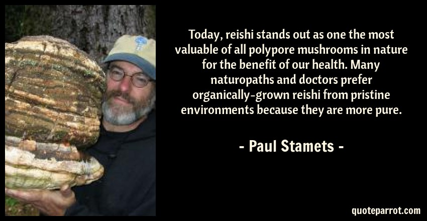 Paul Stamets Quote: Today, reishi stands out as one the most valuable of all polypore mushrooms in nature for the benefit of our health. Many naturopaths and doctors prefer organically-grown reishi from pristine environments because they are more pure.