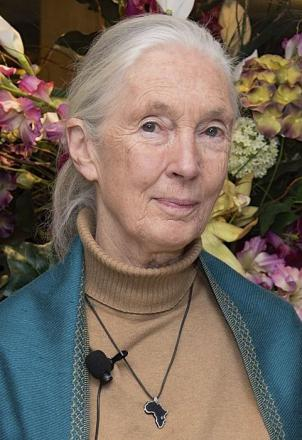 Picture of quotation author Jane Goodall